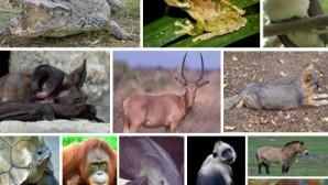 Canlı türleri çok hızlı yok oluyor