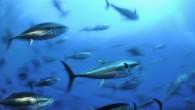 Denizlerdeki canlı nüfusu yarıya indi