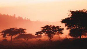 Ruanda Sıkı Önlem Nedeniyle 8 Binden Fazla Kiliseyi Kapattı