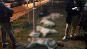 Ankara'da Köpek Katliamı