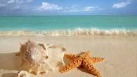 Gençlik sırrı denizyıldızlarında saklı