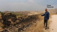 Deyrulzafaran'ın Ağaçları yakıldı