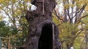 Gürcistan'da Asırlık Meşe Ağacı Kilise'ye Dönüştürüldü