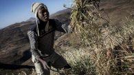 Papa'dan Afrika'ya Bağış