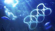 2050'de Denizlerde Balıktan Çok Plastik Olacak