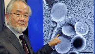 Hücrelerimiz Kendisini Neden Yok Ediyor?