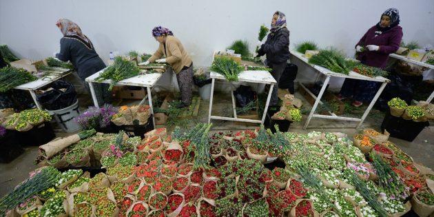 Antalya'dan 50 Milyon Dal Noel Çiçeği