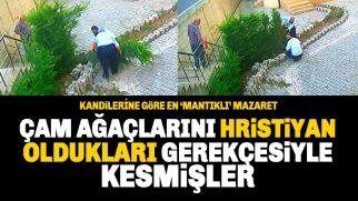 Çam Ağaçlarını Hristiyan Oldukları İddiası ile Kestiler!