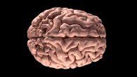 3D Yazıcıyla 9 Ay İşlevsel Kalan Beyinler Üretildi