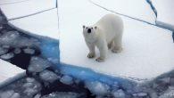 Bilim İnsanları Tarih Verdi: Kuzey Kutbu'ndaki Buzullar 2035 Yılına Kadar Eriyecek