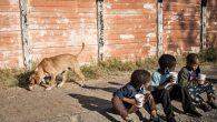 Binlerce Afrikalı Çocuk Açlıktan Ölme Riskiyle Karşı Karşıya