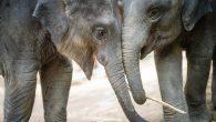 Fransa'da Hayvanlara Özgürlük: Kürk Çiftliği, Yunus Parkı ve Sirkler Kapatılıyor