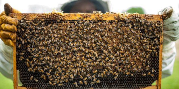 Yaşamın Döngüsünü Sağlayan Arılar Hızla Ölüyor